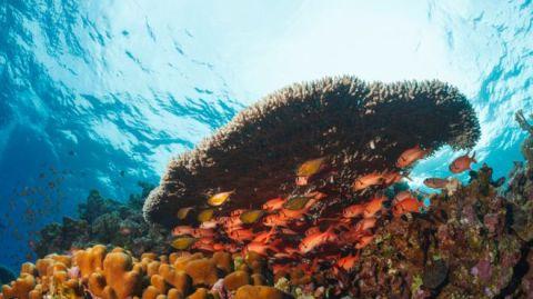 Peces y plantas en el mar