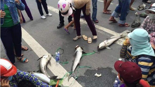 Người dân xếp cá nuôi bị chết ra giữa đường