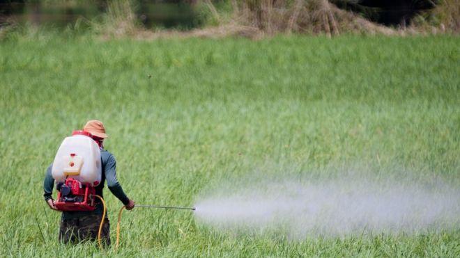 Agricultor aplicando pesticida