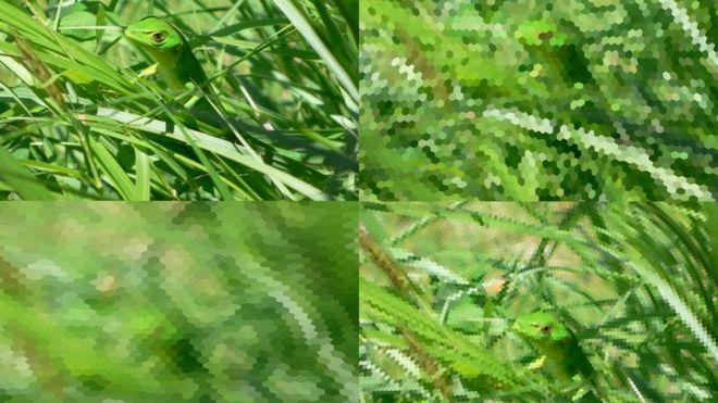 Arriba a la izda., un lagarto visto por un humano a 40 cm, y por una libélula (a la dcha.). Abajo a la izda. por una abeja a 20 cm y por una libélula a esa misma distancia.