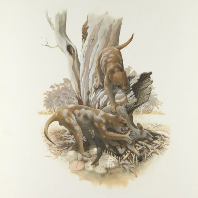 An artist's illustration of Thylacoleo carnifex, Australia's marsupial lion