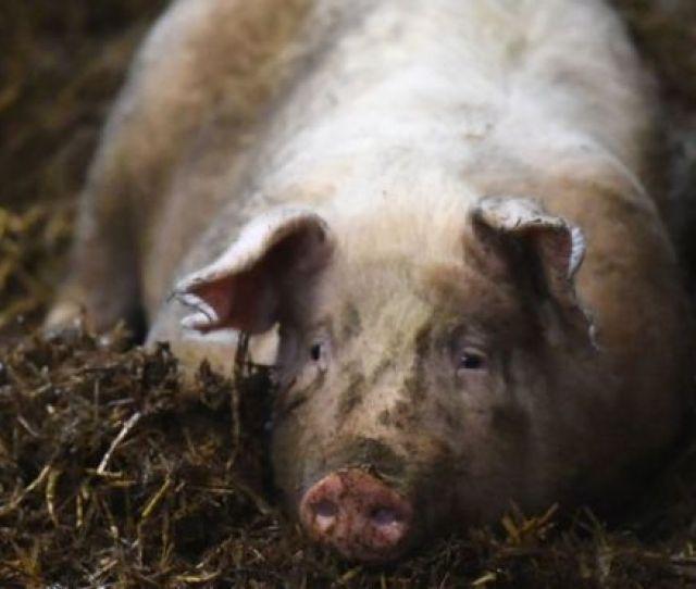 Uk Law To Recognise Animal Feelings