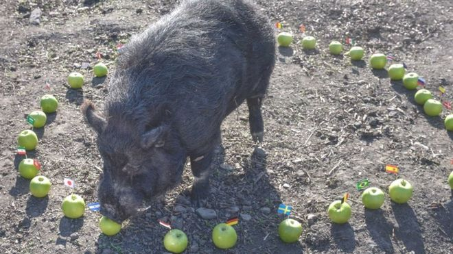 Image result for Marcus the pig