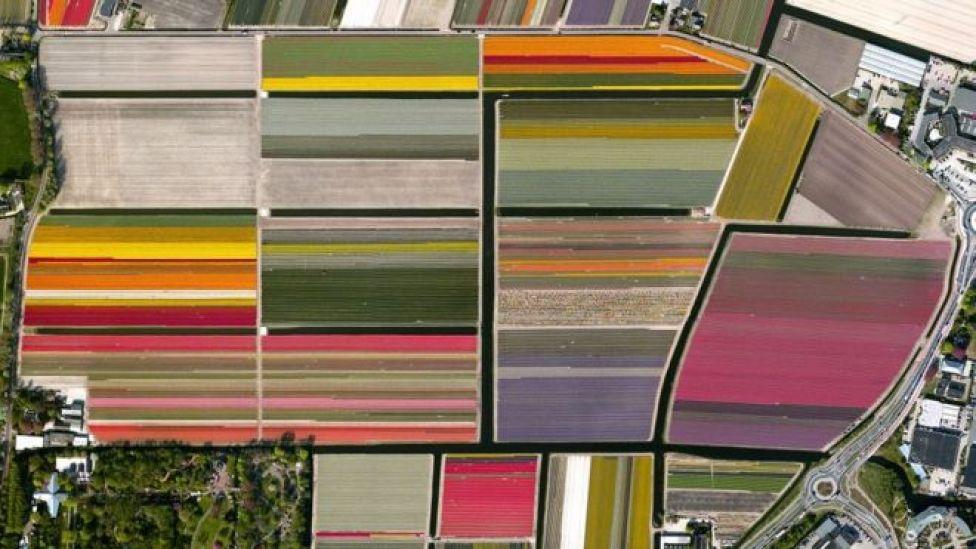 Foto aérea de un campo de tulipanes