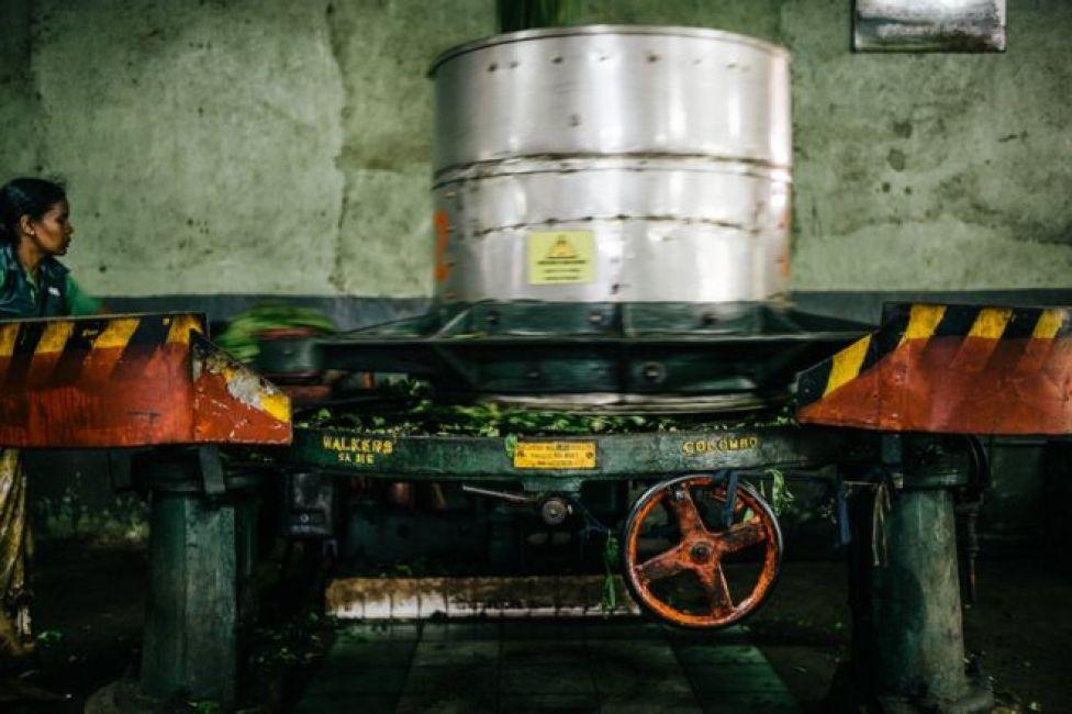 ماكينة تصنيع شاي