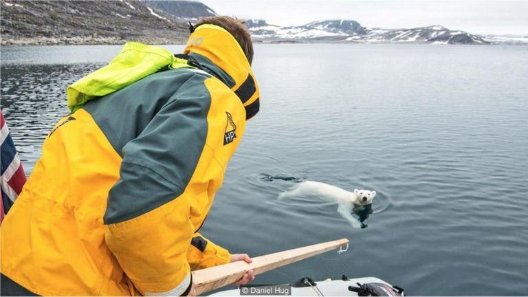 Một chú gấu Bắc Cực nhiều lần tìm cách bơi đến gần tàu