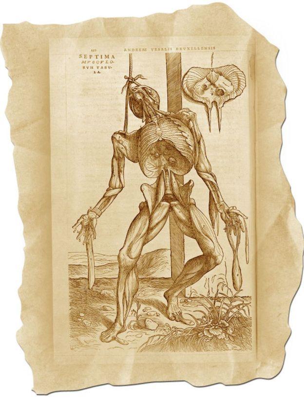 """Ilustración de """"De humani corporis fabrica"""""""