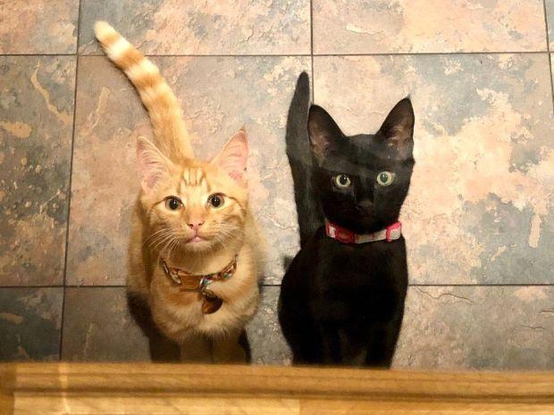 Monty and Luna