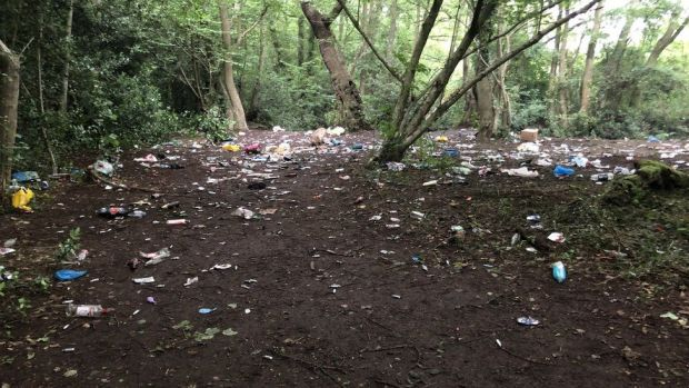 Litter in Brookhay Woods, Staffordshire
