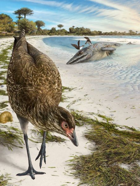Fossil 'wonderchicken' could be earliest known fowl - BBC News