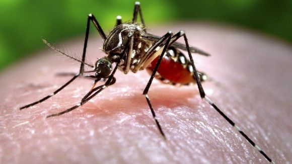 Zika is spread by the Aedes aegypti mosquito which is most active during the day