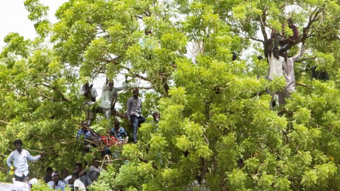 People up a tree at a ceremony where Minni Minawi is appointed governor of Darfur, in el-Fasher, Sudan - Wednesday 8 August 2021