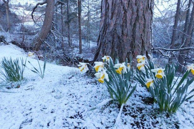 Snow at Braemar