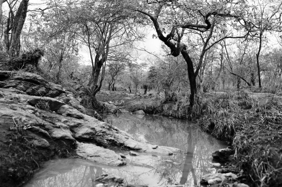 The Rio Nanjana with its stagnant water