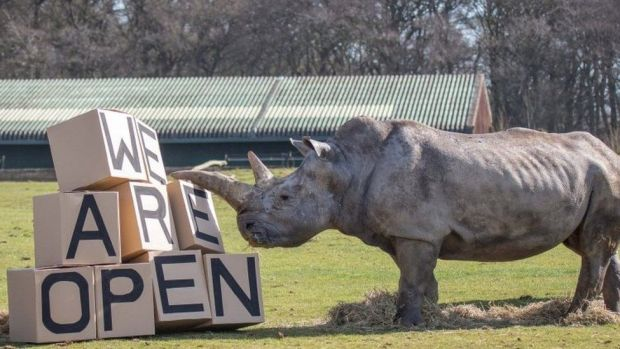 A rhino at Whipsnade Zoo in Bedfordshire