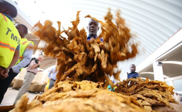 of the 2017 tobacco selling season at the Boka Auction Floors in Harare, Zimbabwe, 15 March 2017.