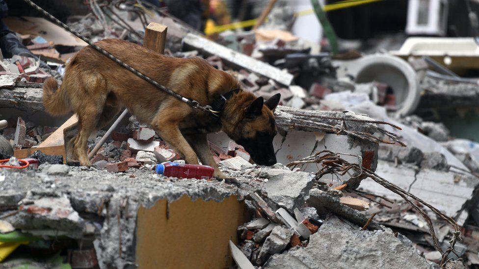 Un perro busca a sobrevivientes en septiembre de 2017 en México.