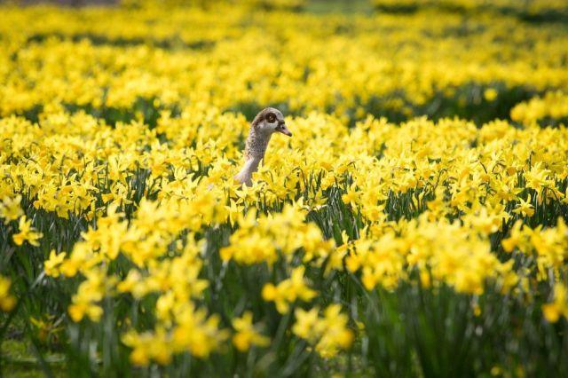 A bird peers over yellow flowers.