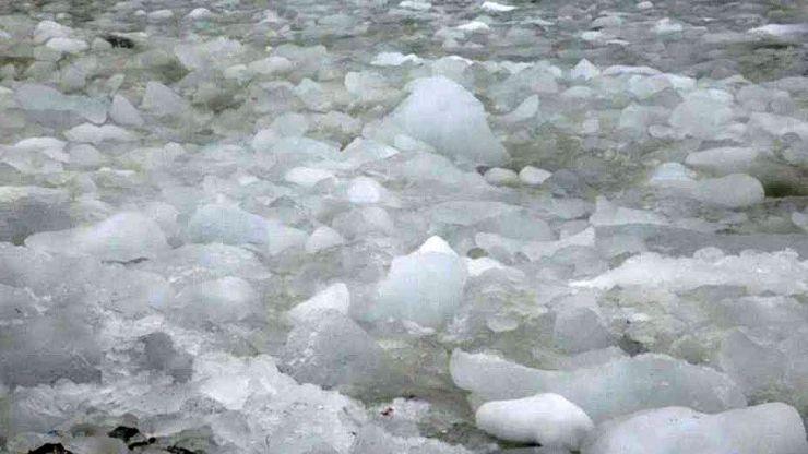El hielo choca contra las playas pedregosas en medio de algas blancas y cuerpos de pingüinos.