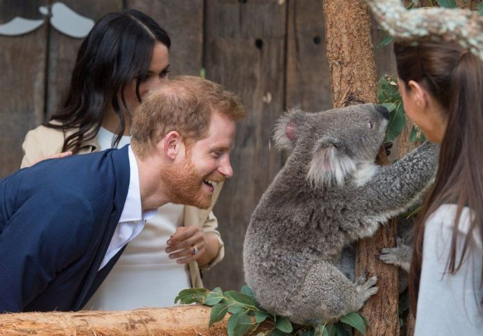 Prince Harry, Duke of Sussex and Meghan, Duchess of Sussex meet a Koala called Ruby during a visit to Taronga Zoo on October 16, 2018 in Sydney, Australia