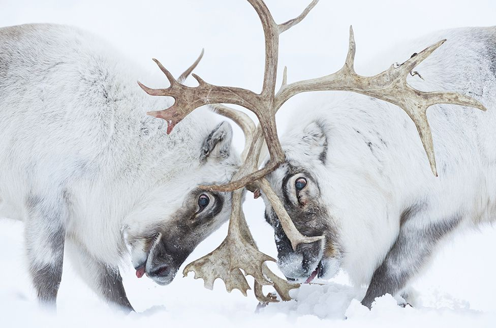 , Wildlife Photographer of the Year: 'Explosive sex' wins top prize, The Evepost BBC News