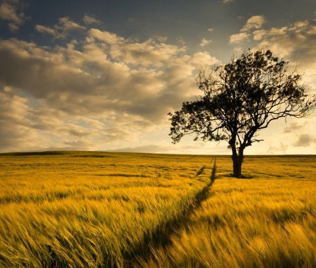 Explorer 273 Lincolnshire Wolds South Picture By Nicholas Silkstone
