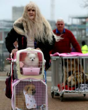 Unas personas circulan con sus perros hacia una feria de mascotas