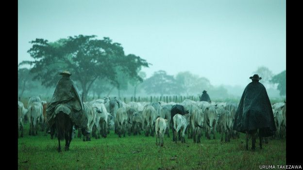 Ganaderos con rebaño en Pantanal, Brasil.
