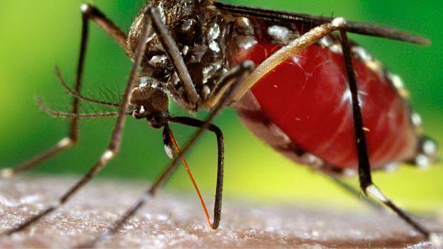 El Aedes aegypti suele picar de día, bien temprano por la mañana y tarde por noche.