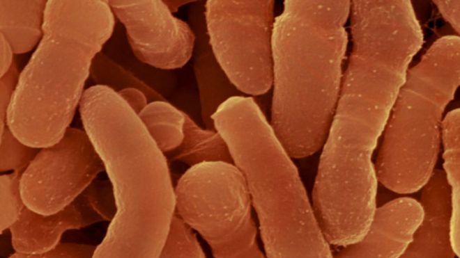 Bacteria. Imagen cortesía de Micropia