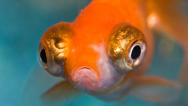 Fish may have feelings too (Credit: Benson Kua/CC by 2.0)