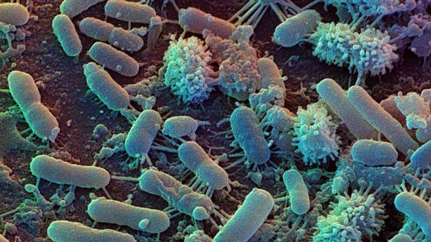 The cleanest kitchen is covered in bacteria (Credit: David Scharf/Science Photo Library)