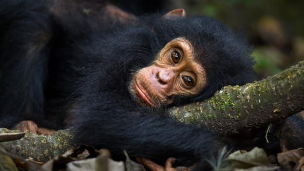 Image of: Captivity Bbc Bbc Earth Many Animals Can Become Mentally Ill