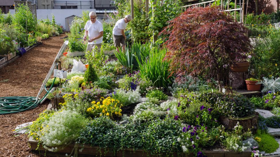 Gardening Could Be The Hobby That Helps You Live To 100 Bbc Worklife