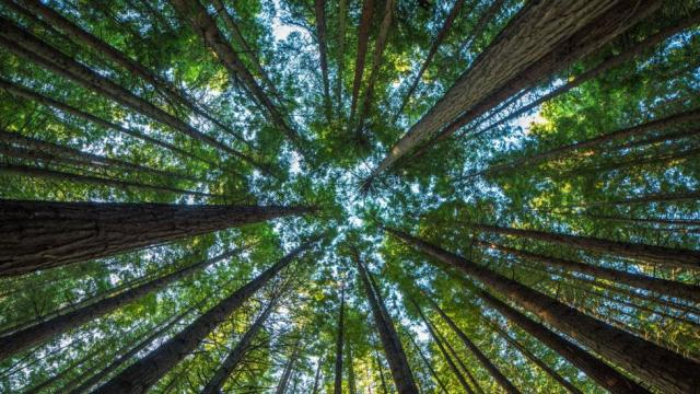 Image result for sustain all life on earth