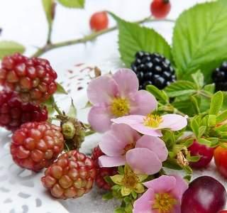 Immunsystem und bioaktive Substanzen, gesunde Ernährung