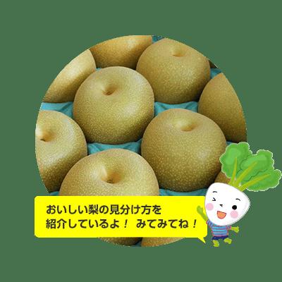 おいしい梨の見分け方紹介