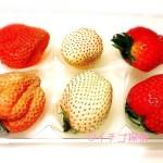 イチゴ探偵|桃の香りのいちご【桃薫】に爽やかな白苺【パールホワイト】奈良県の新しいいちごたち!