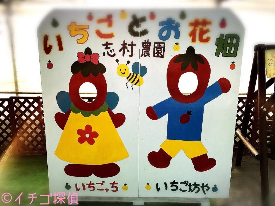 イチゴ探偵|埼玉県の幻のいちご【彩のかおり】のイチゴ狩り!志村農園で5品種の苺を食べ比べ!