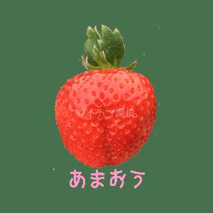 イチゴ探偵|あまおう品種図鑑