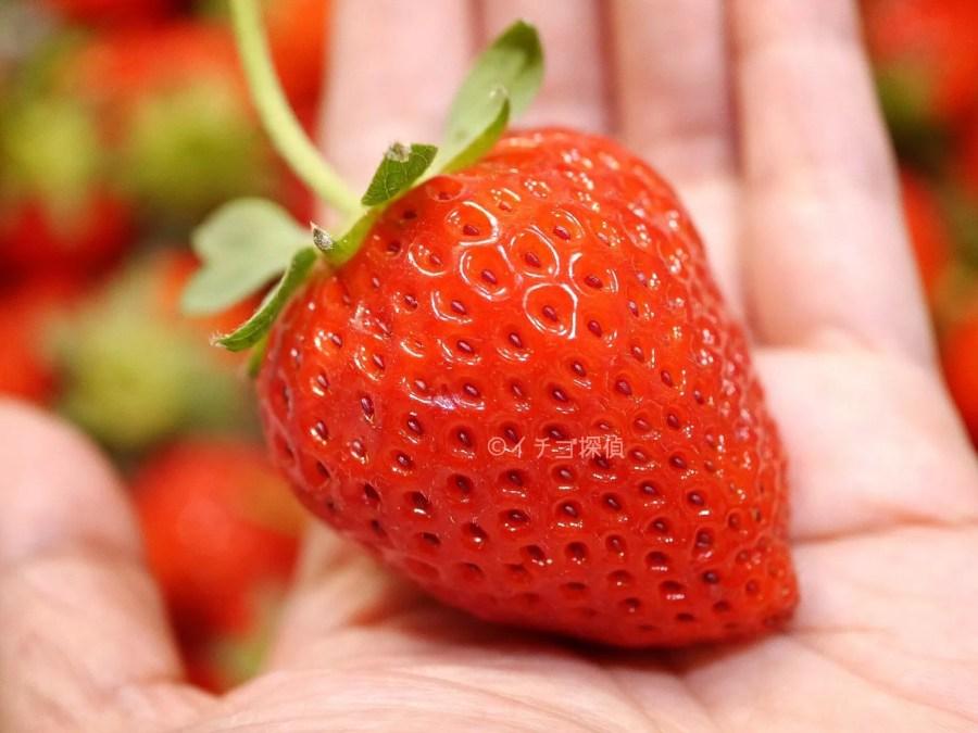 イチゴ探偵|秩父産のつる付いちごがどっさり!香り高い大粒【かおりの】が50粒以上入って2000円!