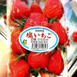 イチゴ探偵|ミネラル還元塩で育てられた【塩いちご】を初体験!シャキっとした食感の希少イチゴ