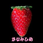 イチゴ探偵|かなみひめ品種図鑑・断面図