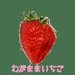 イチゴ探偵|わがままいちご品種図鑑