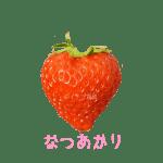 イチゴ探偵|なつあかり品種図鑑