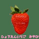イチゴ探偵|ひょうたんいちご品種図鑑・断面図