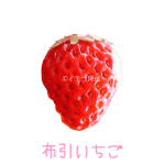 イチゴ探偵|布引いちご品種図鑑