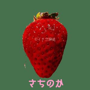 イチゴ探偵|さちのか品種図鑑