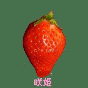 イチゴ探偵|咲姫品種図鑑
