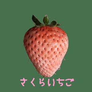 イチゴ探偵 さくらいちご品種図鑑